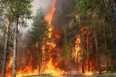 Прогноз пожаров 2014.